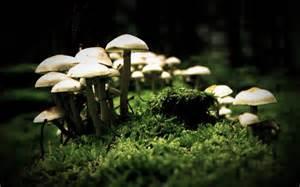 Japanese mushroom